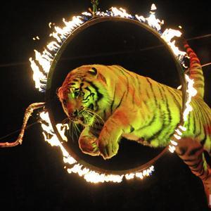 Цирки Изумруда