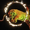 Цирки в Изумруде