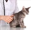 Ветеринарные клиники в Изумруде